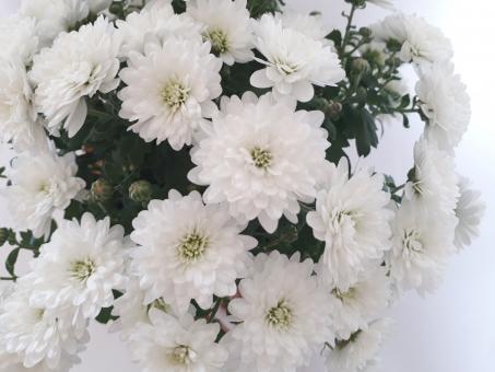 法要にお供えする花